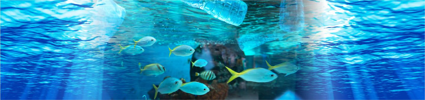 魚が泳ぐきれない海