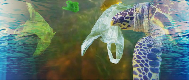 ごみの中を泳ぐ海亀